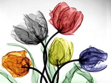 parrot-tulips-low